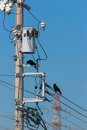 Crows on electrical wires against blue sky. Royalty Free Stock Photo