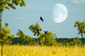Crows fly Royalty Free Stock Photography