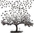 Corvi albero