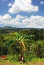Croydon Plantation, Jamaica Royalty Free Stock Photo
