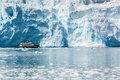 Cruise tour at Holgate Glacier of Aialik Bay in Alaska Royalty Free Stock Photo