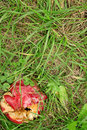 Crushed red apple in green grass Stock Images