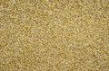 Crushed wheat straw closeup of dried Royalty Free Stock Images