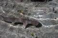 Crusing Shark Royalty Free Stock Photo