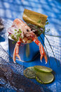 Crustacean canned presentation of a with mixed vegetables in box Stock Images