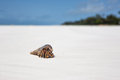 Crustacean small crossing a wide beach in diani kenya Royalty Free Stock Photography