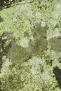 Crustose lichens on rock from New London, New Hampshire. Royalty Free Stock Photo