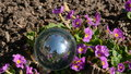 Crystal ball and spring flowers in wind the Royalty Free Stock Image