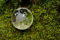 Crystal-clear globe on green moss Stock Photos