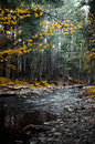 Crystal clear water of mountain river among fall woods in the Carpathian mountains in fog Royalty Free Stock Photo