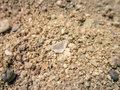 stock image of  Crystal glass in sand.