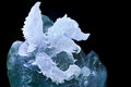 Crystal hawk the close up of berg carving Royalty Free Stock Image