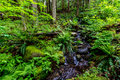 A Crystal Stream Flowing Through a Beautiful Primeval Rain Forest Royalty Free Stock Photo