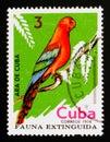 Cuban Macaw Ara tricolor, Extinct birds serie, circa 1974 Royalty Free Stock Photo