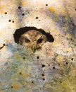 Cuban Screech Owl looking from a hole Royalty Free Stock Photo