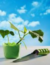 Cucumber seedling in pot and shovel on sky background Stock Photography