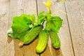 Cucumber on wooden table Royalty Free Stock Image