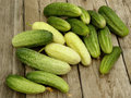 Cucumbers fresh harvested of different varieties Stock Images