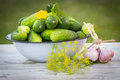 Cucumbers in metal bowl and fresh garlic with dill in garden on sunny day ripe old white wooden table healthy nutrition Royalty Free Stock Image