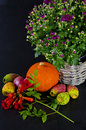 Cucurbita and American Trumpet Vine Stock Photo