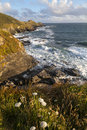 Cudden point cornwall portrait view of in late afternoon sunlight Royalty Free Stock Photo