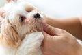 Cuddling pet dog Royalty Free Stock Photo