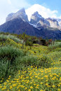 Cuernos Del Paineand meadow Royalty Free Stock Photography