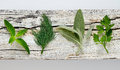 Culinary aromatic herbs garden on a weathered board top view Royalty Free Stock Image