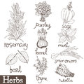 Culinary herbs set hand drawing sketch Stock Images