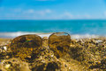 óculos de sol na areia Imagem de Stock Royalty Free