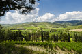 Cultivate wine in tuscany landscape Stock Photo