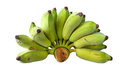 Cultivated banana bananas thai thai bananas on on white background Stock Photography