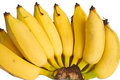 Cultivated banana picture isolate yellow Royalty Free Stock Photo