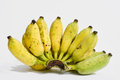 Cultivated banana thai bananas on white background Stock Image