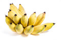 Cultivated banana on white background Royalty Free Stock Photo