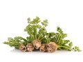 Cultivated celery bundles of fresh shot on white Stock Photography