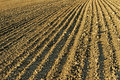 Cultivated field. Royalty Free Stock Photography