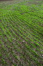 Cultivated Land Stock Photography