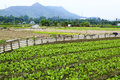 Cultivated land in hong kong Stock Photo