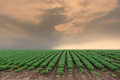 Cultivated land in a rural landscape Royalty Free Stock Photo