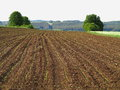 Cultivated land at spring huge field with furrows and already planted crop starts to sprout Stock Photography
