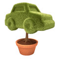 Cultivating car tree growing inside a vase overwhite clipping path included Stock Photography