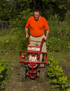 Cultivating between rows with a garden tiller Stock Photo