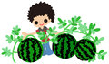 Cultivating watermelons Royalty Free Stock Photography