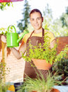 The cultivation of plants in pots Stock Image