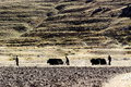 Cultivation in tibet traditional style was kept well Royalty Free Stock Photo