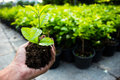 Cultivation tree garden small nature Stock Image