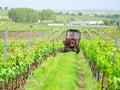 Cultivation of vineyard field velke bilovice south moravia czech republic Royalty Free Stock Images