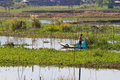Cultivations on inle lake man tending his hydroponic floating garden myanmar burma Royalty Free Stock Photo