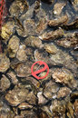 Culture of oyster in Cap Ferret Royalty Free Stock Photo